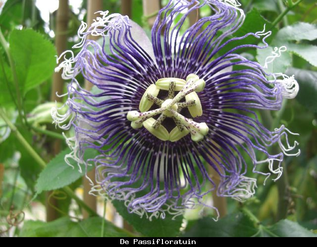 Byron Beauty