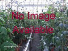 no image Available 131